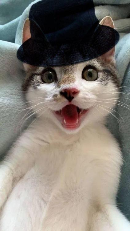 cat.thumb.png.f86f00d04681c5812e258a3890b6bbf3.png
